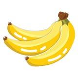 Fruta fresca del plátano Foto de archivo libre de regalías