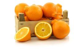 Fruta fresca e colorida do tangelo de Minneola Foto de Stock Royalty Free