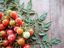 Fruta fresca y veggie del tomate de cereza Imagen de archivo