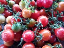Fruta fresca y veggie del tomate de cereza Imágenes de archivo libres de regalías