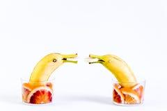 Fruta, fruta con los delfínes, jugando con la fruta Fotografía de archivo