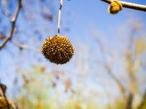 Fruta hermosa del árbol Fotos de archivo libres de regalías