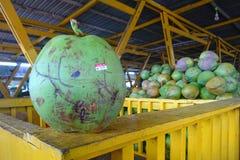 Fruta joven del coco imagen de archivo
