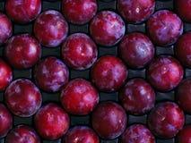 Fruta madura, árvore-fresca pronta para o transporte ou consumo Imagens de Stock