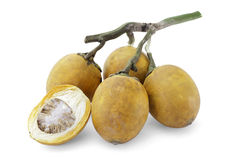 Fruta madura de la nuez de palma del acera o de betel con la trayectoria Imagenes de archivo