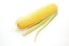Fruta madura del maíz encendido sobre blanco imagen de archivo libre de regalías