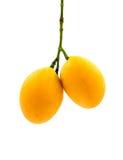 Fruta mariana del ciruelo aislada en el fondo blanco Foto de archivo libre de regalías