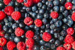 Fruta orgânica da floresta Imagem de Stock