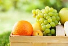 Fruta orgánica de la comida fresca de la cesta de la comida campestre bio Fotografía de archivo libre de regalías