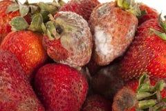 Fruta podre imagem de stock royalty free