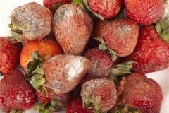 Fruta podre Fotos de Stock