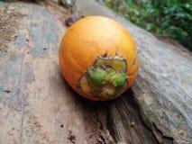 Fruta rasgada de la nuez de areca foto de archivo libre de regalías