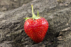 Fruta roja de la fresa en la madera Imagen de archivo