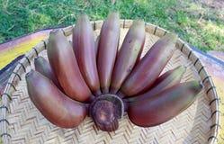 Fruta roja de los plátanos Imágenes de archivo libres de regalías