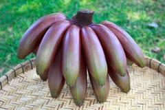 Fruta roja de los plátanos Imagenes de archivo