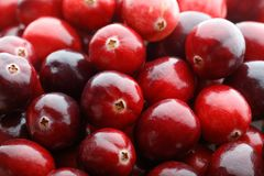 Fruta roja del arándano Foto de archivo libre de regalías