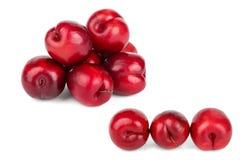 Fruta roja del ciruelo aislada en el fondo blanco Imagen de archivo libre de regalías