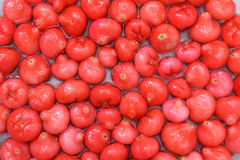 Fruta roja, manzana color de rosa que flota en el agua, fondo de la naturaleza Fotografía de archivo