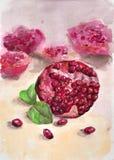 fruta Romã vermelha Fotografia de Stock