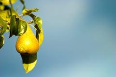 Fruta salvaje Fotografía de archivo