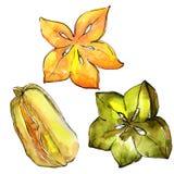 Fruta salvaje del carambola exótico en un estilo de la acuarela aislada Imágenes de archivo libres de regalías