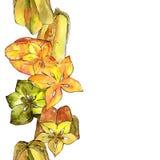 Fruta salvaje del carambola exótico en un modelo del estilo de la acuarela Foto de archivo libre de regalías