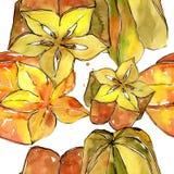 Fruta salvaje del carambola exótico en un modelo del estilo de la acuarela Imágenes de archivo libres de regalías