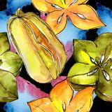 Fruta salvaje del carambola exótico en un modelo del estilo de la acuarela Imagen de archivo