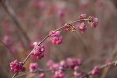 Fruta salvaje hermosa Foto de archivo libre de regalías