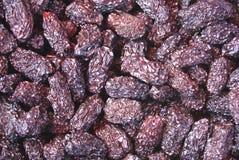 Fruta seca de la azufaifa Fruta secada de la azufaifa Fruta de las fechas secadas Foto de archivo