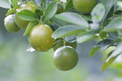 Fruta suave Fotos de archivo