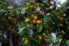 Fruta subtropical Fotografía de archivo