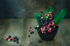 Fruta tailandesa del arándano Imágenes de archivo libres de regalías
