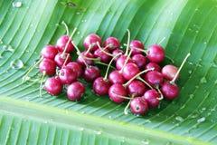 Fruta tailandesa del flacourtia Fotos de archivo libres de regalías