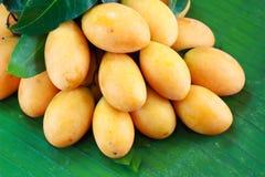 Fruta tailandesa exótica. Maprang, ciruelo mariano, Gandaria, Fotografía de archivo libre de regalías