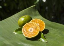 Fruta tropical de la mandarina imagen de archivo libre de regalías