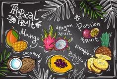Fruta tropical del vector Imagen de archivo