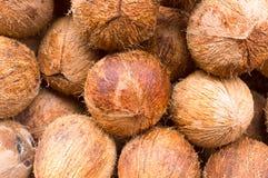 Fruta tropical sabrosa fresca del coco de la isla caribeña Diseño abstracto colorido inconsútil del modelo de objeto decorativo d fotografía de archivo