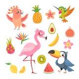 Fruta tropical y pájaros Imagen de archivo libre de regalías