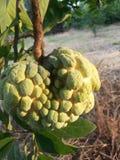 Fruta verde Fotos de archivo