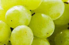 Fruta verde das uvas Fotografia de Stock Royalty Free