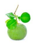 Fruta verde fresca del pomelo imagen de archivo libre de regalías