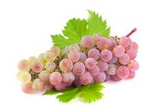 Fruta violeta de la uva Foto de archivo