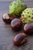 Fruta y cáscaras dispersadas del Conker Imagen de archivo libre de regalías