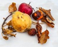 Fruta y hojas del otoño con el membrillo y las manzanas Foto de archivo libre de regalías