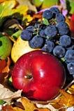 Frutas 3 del otoño Foto de archivo libre de regalías