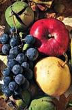 Frutas 6 del otoño Imágenes de archivo libres de regalías