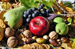 Frutas 6 del otoño Imagen de archivo
