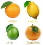 Frutas 4 Foto de Stock Royalty Free