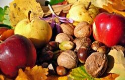 Frutas 7 del otoño Imágenes de archivo libres de regalías
